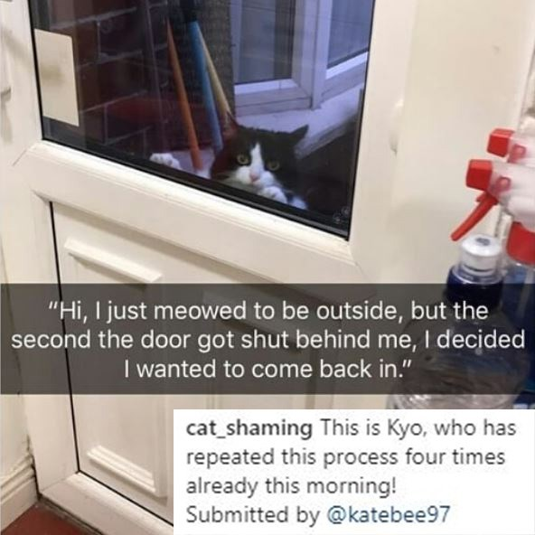 """Property - """"Hi, I just meowed to be outside, but the second the door got shut behind me, I decided I wanted to come back in."""" cat_shaming This is Kyo, who has repeated this process four times already this morning! Submitted by @katebee97"""