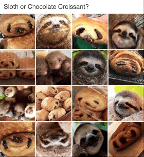Snout - Sloth or Chocolate Croissant?