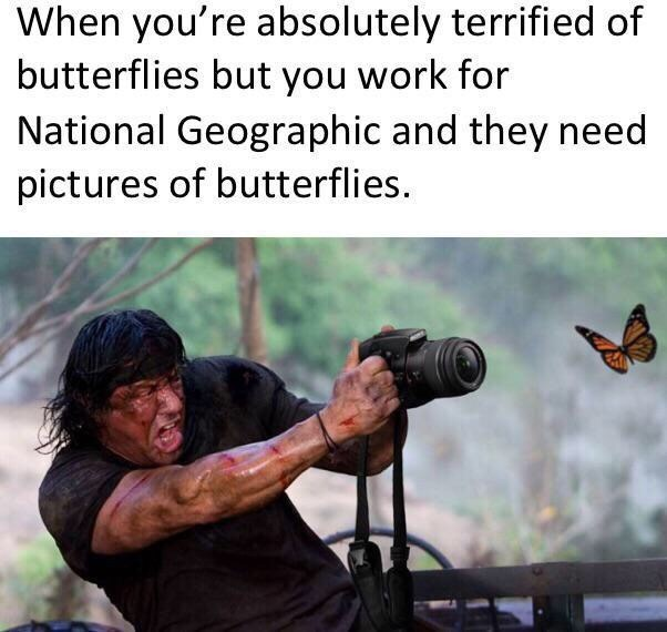 Photography - When you're absolutely terrified of butterflies but you work for National Geographic and they need pictures of butterflies.
