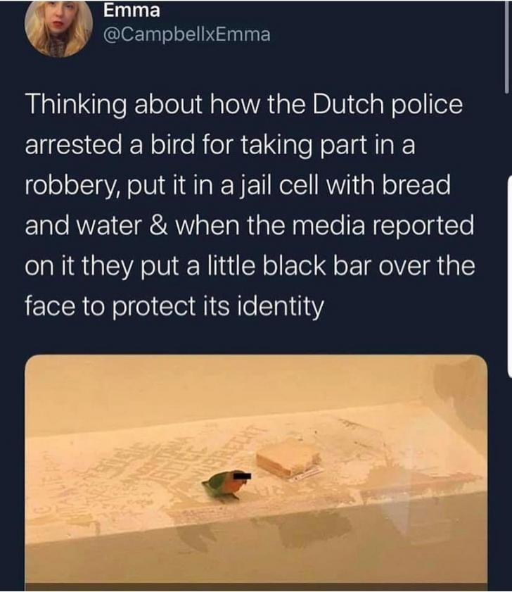 Text - Emma @CampbellxEmma Thinking about how the Dutch police arrested a bird for taking part in a robbery, put it in a jail cell with bread and water & when the media reported on it they put a little black bar over the face to protect its identity BRECHT