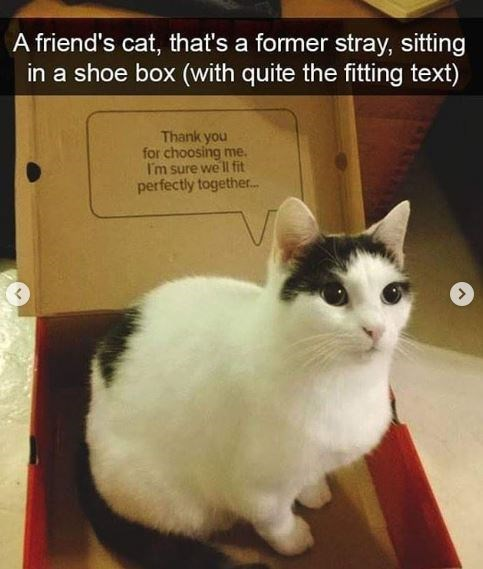 Cat - A friend's cat, that's a former stray, sitting in a shoe box (with quite the fitting text) Thank you for choosing me. I'm sure we ll fit perfectly together.