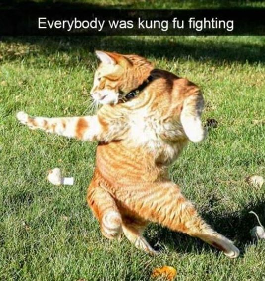 Cat - Everybody was kung fu fighting