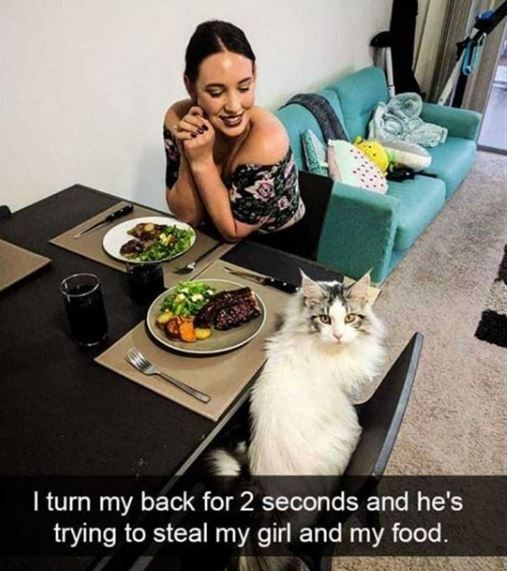 Cat - I turn my back for 2 seconds and he's trying to steal my girl and my food.