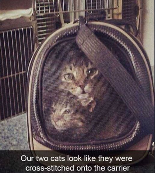 Cat - AR Our two cats look like they were cross-stitched onto the carrier