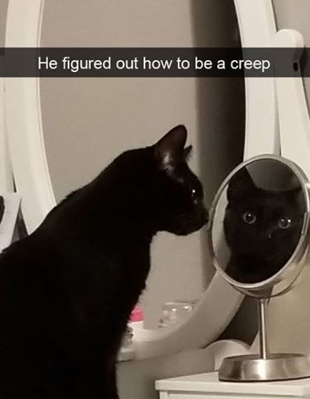 Cat - He figured out how to be a creep