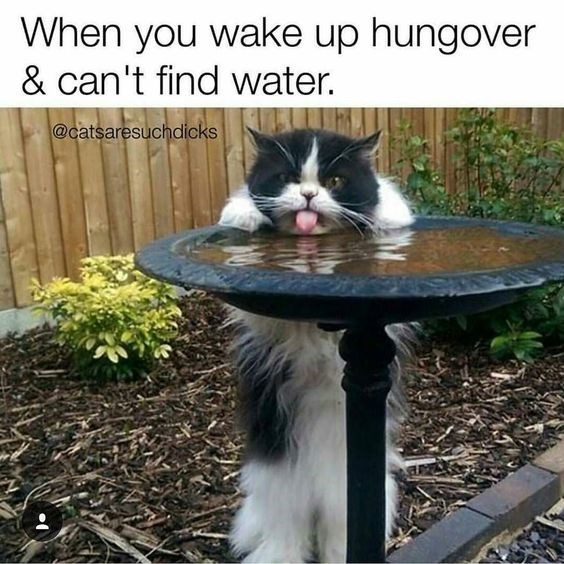 Cat - When you wake up hungover & can't find water. @catsaresuchdicks