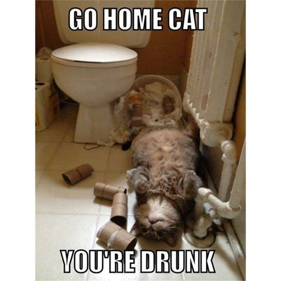 Dog - GO HOME CAT YOU'RE DRUNK
