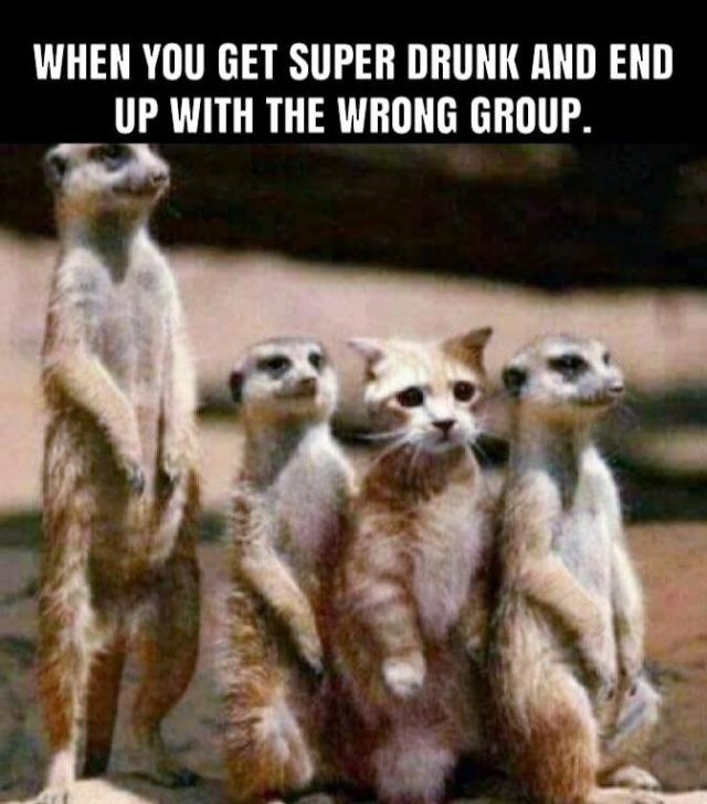 Meerkat - WHEN YOU GET SUPER DRUNK AND END UP WITH THE WRONG GROUP.