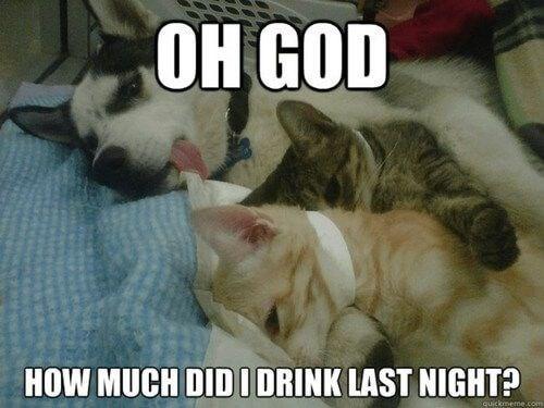 Cat - Он GOD HOW MUCH DID I DRINK LAST NIGHT? quickmeme.com