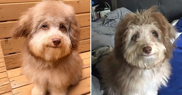 nori human like face dog