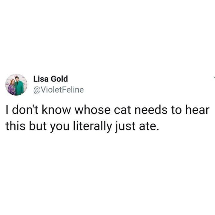 tweet by violetfeline i don't know whose cat needs to hear this but you literally just ate