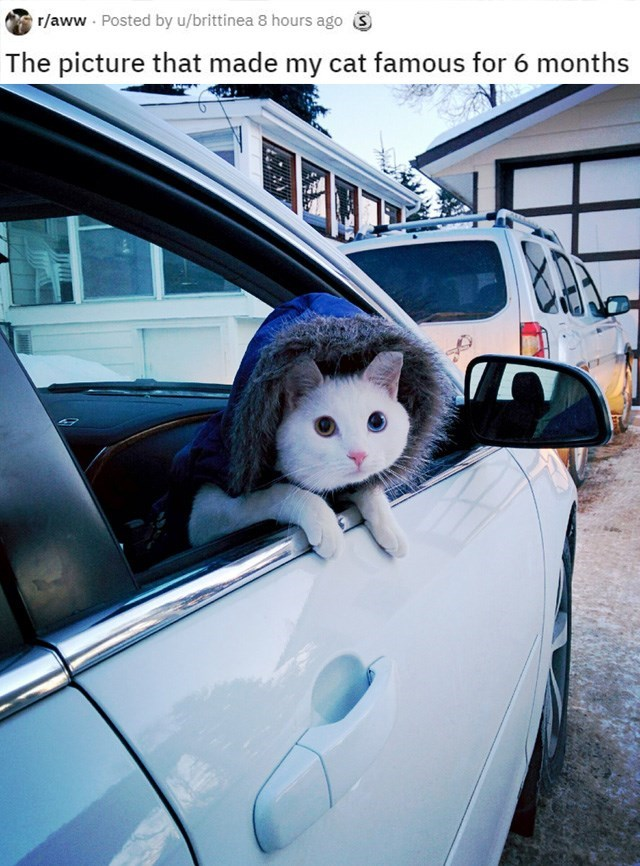Vehicle - Posted by u/brittinea 8 hours ago 3 r/aww The picture that made my cat famous for 6 months