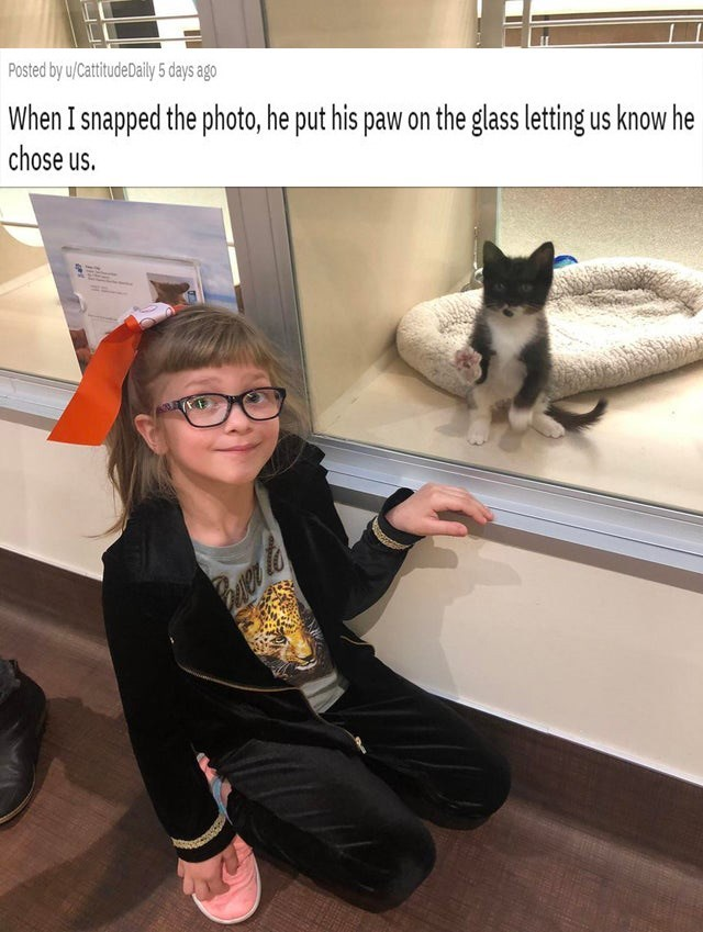 Photo caption - Posted by u/CattitudeDaily 5 days ago When I snapped the photo, he put his paw on the glass letting us know he chose us. Buer