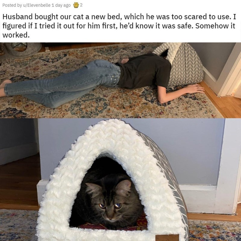 Cat - Posted by u/Elevenbelle 1 day ago 2 Husband bought our cat a new bed, which he was too scared to use. I figured if I tried it out for him first, he'd know it was safe. Somehow it worked.