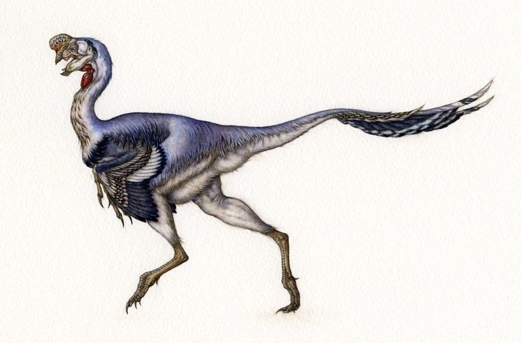 Dinosaur photo purple theropod Citipati running on hind legs long tail white background