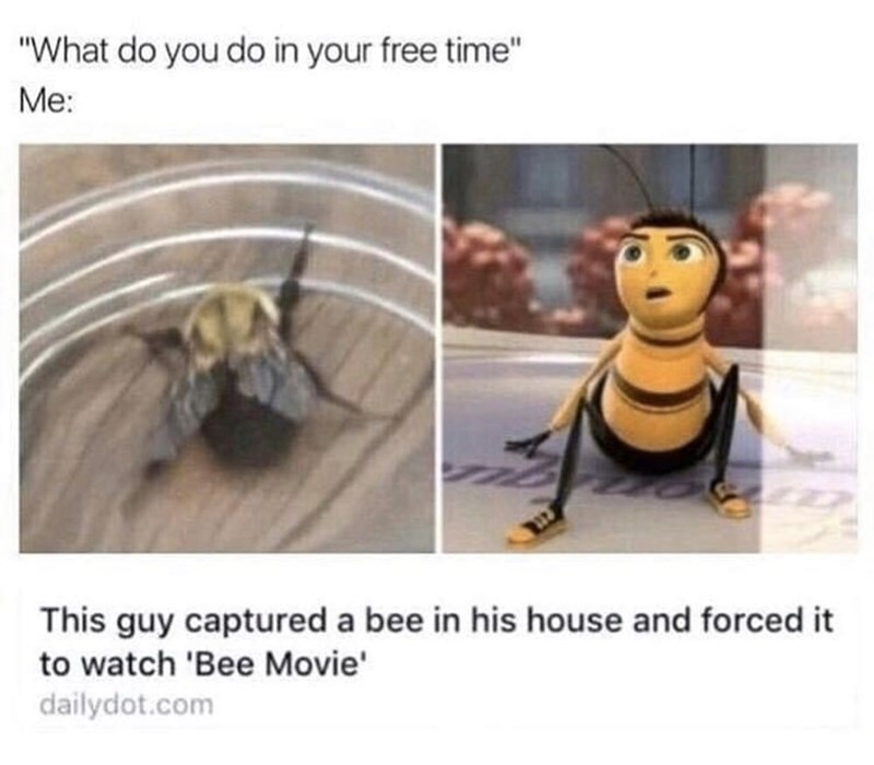 """Organism - """"What do you do in your free time"""" Me: This guy captured a bee in his house and forced it to watch 'Bee Movie' dailydot.com"""