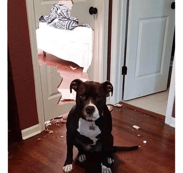 Room - Dog