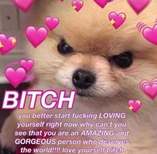 Dog - BITCH you better start fucking LOVING yourself right now why can't you see that you are an AMAZING and GORGEOUS person who deserves the world!!!! Ilove yourself bitch