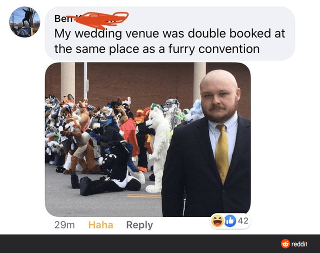 Media - My wedding venue was double booked at the same place as a furry convention Ib 42 Haha Reply 29m O reddit