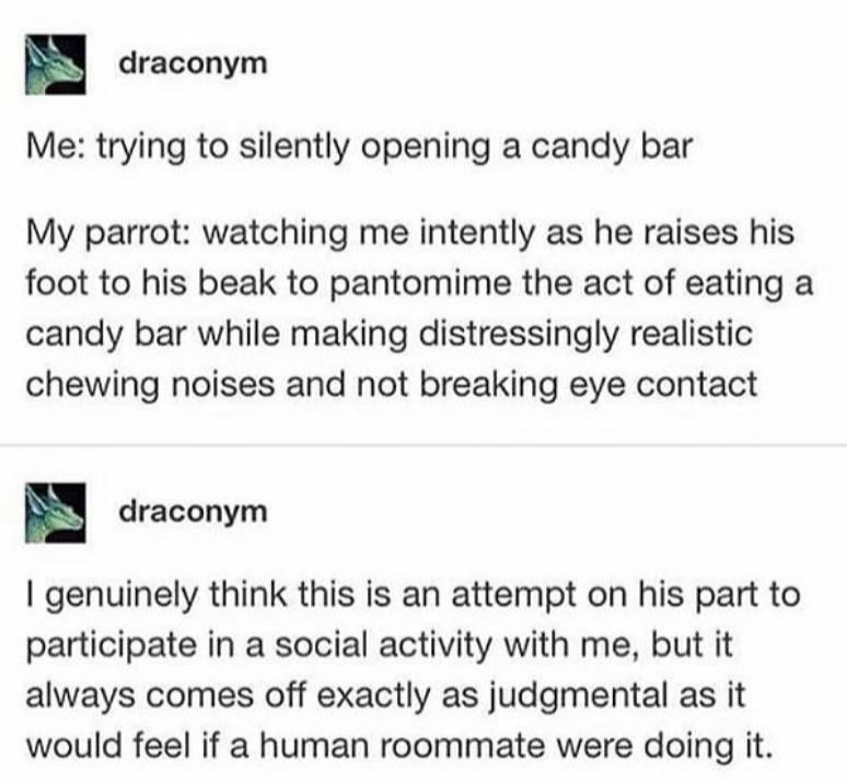 Text - draconym Me: trying to silently opening a candy bar My parrot: watching me intently as he raises his foot to his beak to pantomime the act of eating a candy bar while making distressingly realistic chewing noises and not breaking eye contact draconym I genuinely think this is an attempt on his part to participate in a social activity with me, but it always comes off exactly as judgmental as it would feel if a human roommate were doing it.