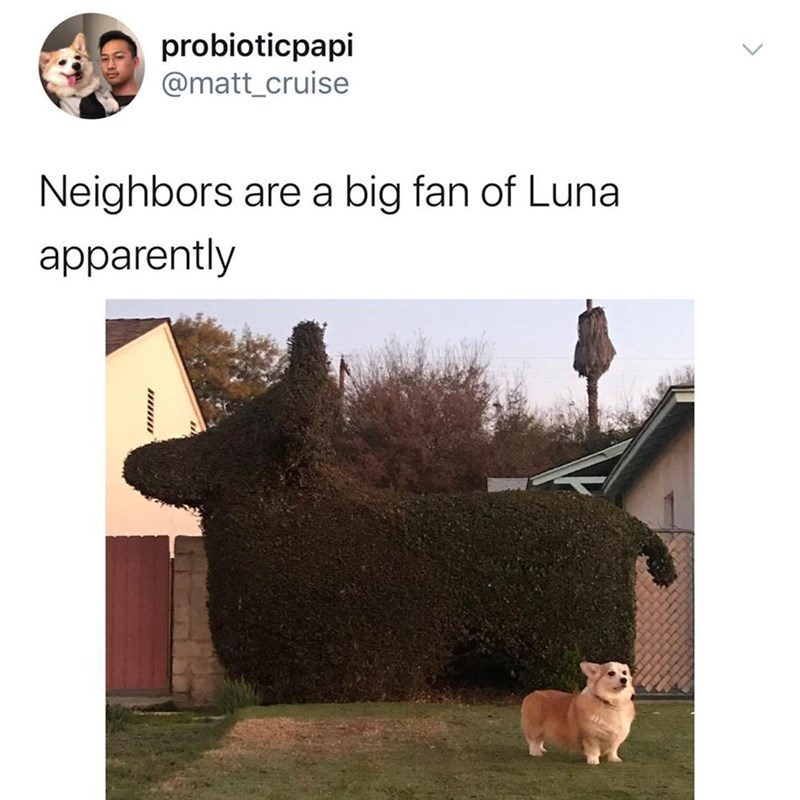 Text - probioticpapi @matt_cruise Neighbors are a big fan of Luna apparently