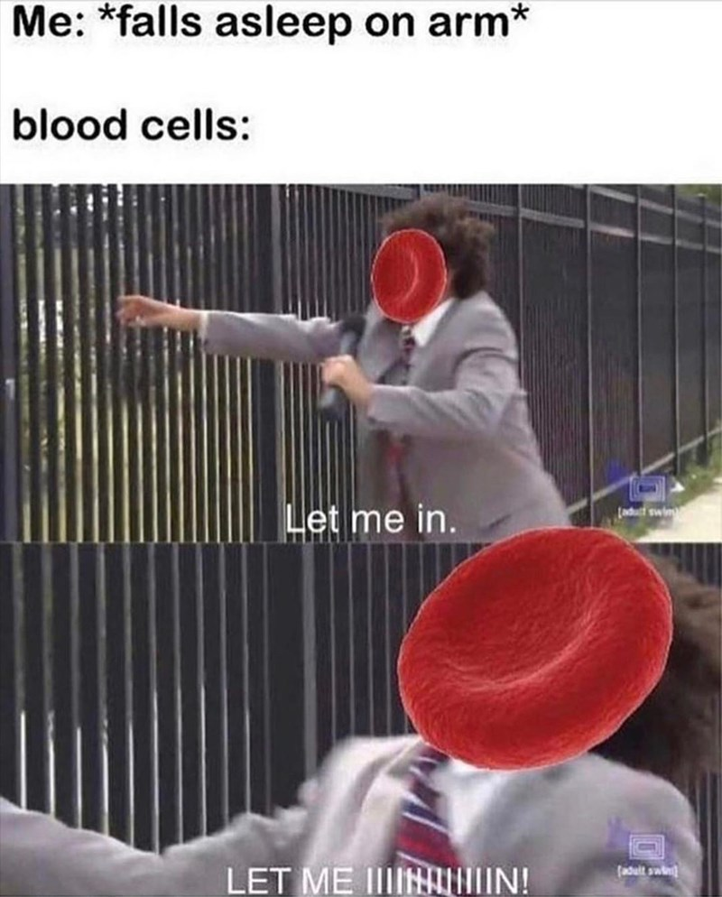Arm - Me: *falls asleep on arm* blood cells: Let me in. (aduct swing LET ME IIIIN IN! (adult swin