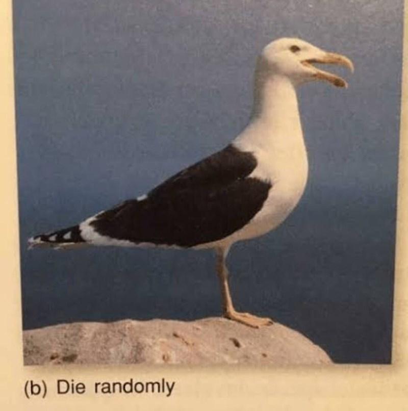 Bird - (b) Die randomly