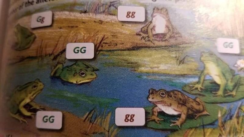 Frog - rof the Gg 88 GG GG GG 88