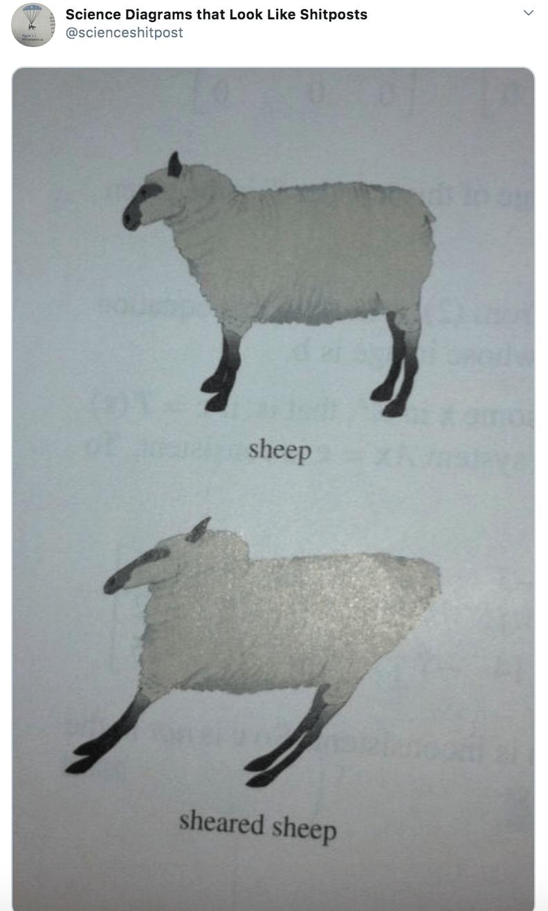 Sheep - Science Diagrams that Look Like Shitposts @scienceshitpost sheep sheared sheep