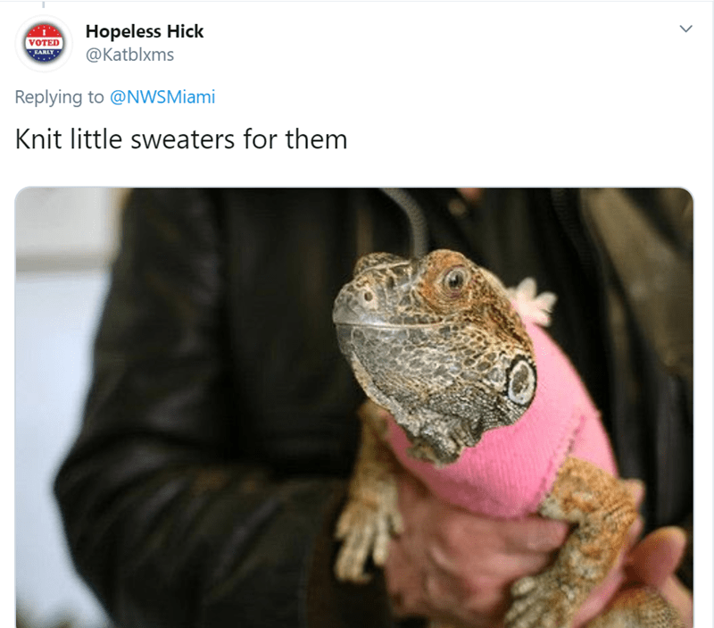 Reptile - Hopeless Hick @Katblxms VOTED EARLY Replying to @NWSMiami Knit little sweaters for them