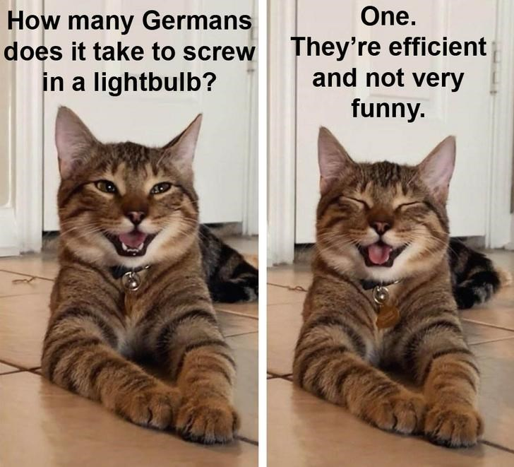 Cat - One. How many Germans does it take to screw in a lightbulb? They're efficient and not very funny.