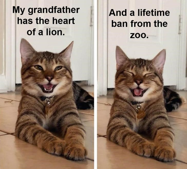 Cat - My grandfather has the heart And a lifetime ban from the of a lion. zo.
