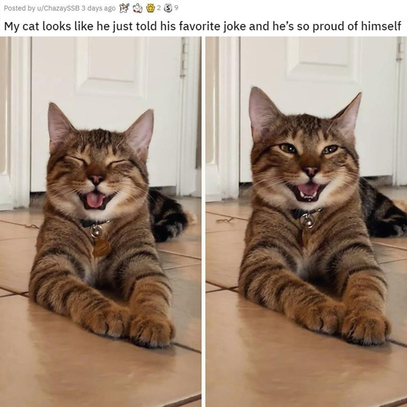Cat - Posted by u/ChazaySSB 3 days ago My cat looks like he just told his favorite joke and he's so proud of himself ONASE
