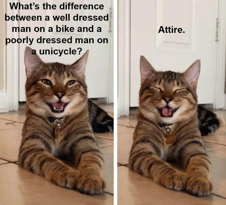 Cat - What's the difference between a well dressed man on a bike and a poorly dressed man on a unicycle? Attire.