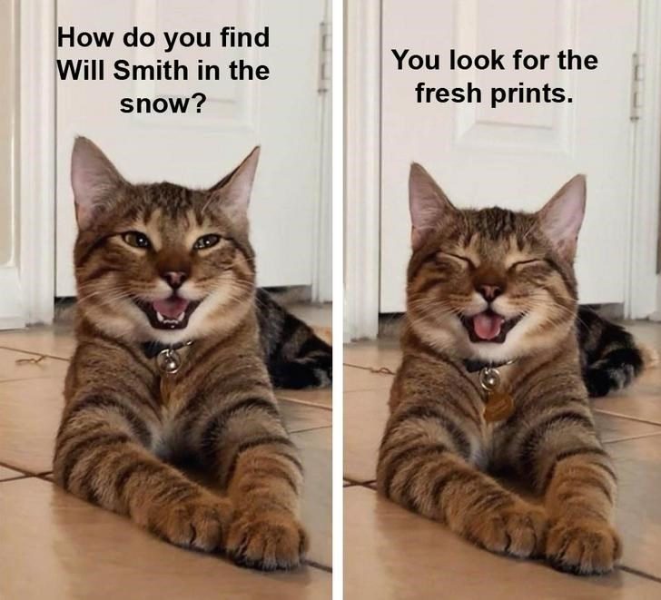 Cat - How do you find You look for the Will Smith in the fresh prints. snow?