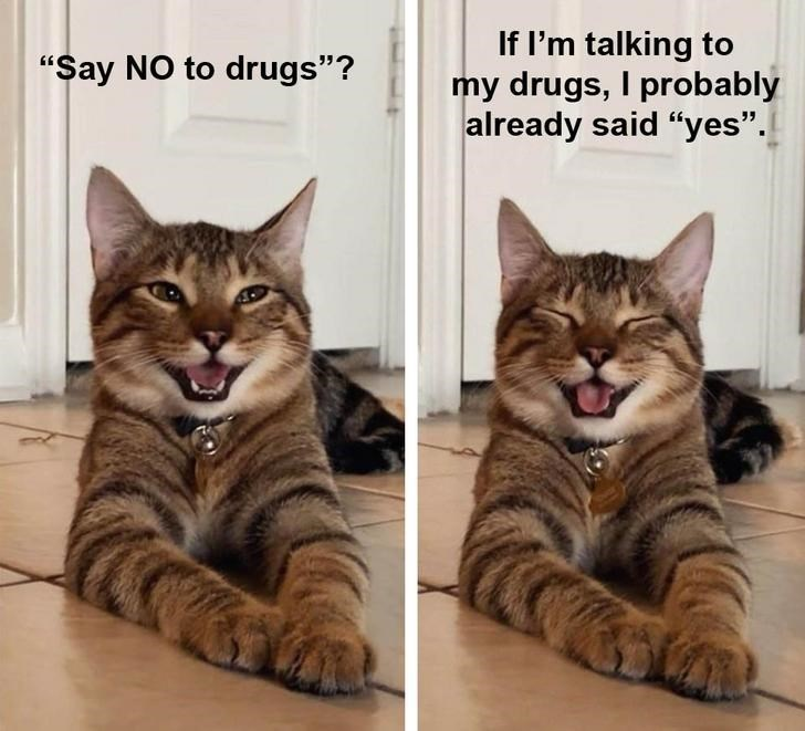 "Cat - If l'm talking to my drugs, I probably already said ""yes"". ""Say NO to drugs""?"