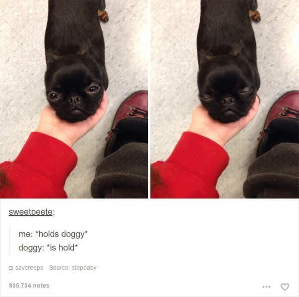 """Canidae - sweetpeete: me: """"holds doggy* doggy: """"is hold* S savcreeps Source: stepbaby 935,734 notes"""