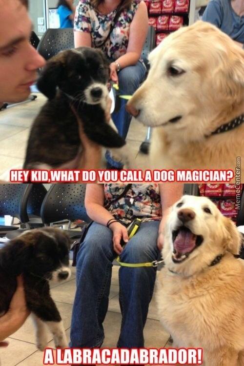 Dog - HEY KID,WHAT DO YOU CALLA DOG MAGICIAN? A LABRACADABRADOR! MemeCenter.com