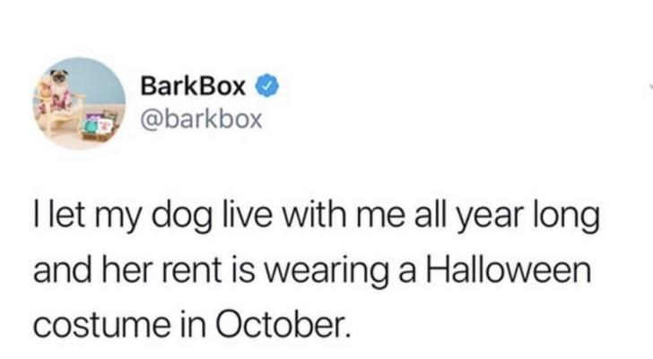 Text - BarkBox @barkbox I let my dog live with me all year long and her rent is wearing a Halloween costume in October.