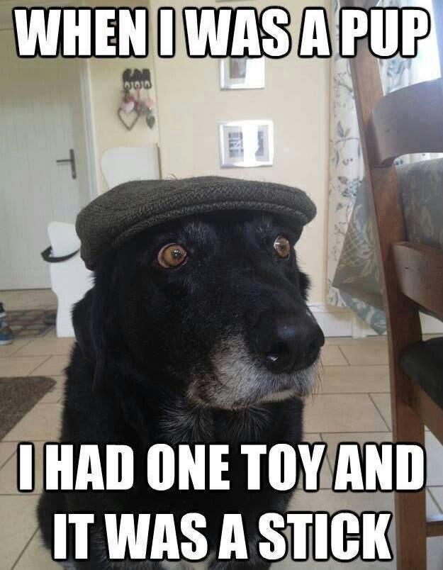 Dog - WHEN I WAS A PUP CAR I HAD ONE TOY AND IT WAS A STICK IN