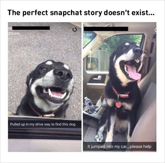 Dog - The perfect snapchat story doesn't exist... hag০ 66 पट Pulled up in my drive way to find this dog It jumped into my car.please help