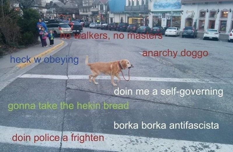 Dog - no walkers, no masters anarchy doggo heck w obeying doin me a self-governing gonna take the hekin bread borka borka antifascista doin policela frighten
