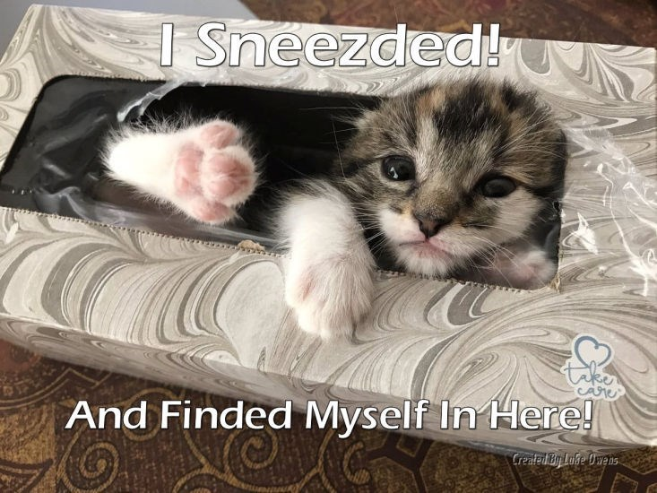 Cat - I Sneezded! And Finded Myself In Here! Created Biy Luke Owens