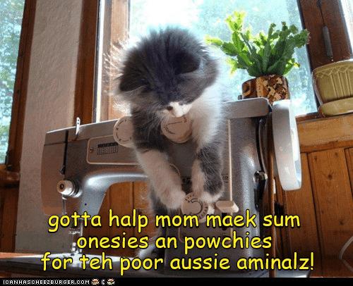 Cat - BORD gotta halp mom maek sum onesies an powehies forkteh poor aussie aminalz! ICANHASCHEEZBURGER.COM E