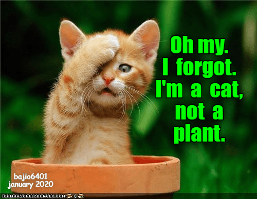 Cat - Oh my. I forgot. I'm a cat, not a plant. bajio6401 january 2020 ICANHASCHEEZE URGER.COM