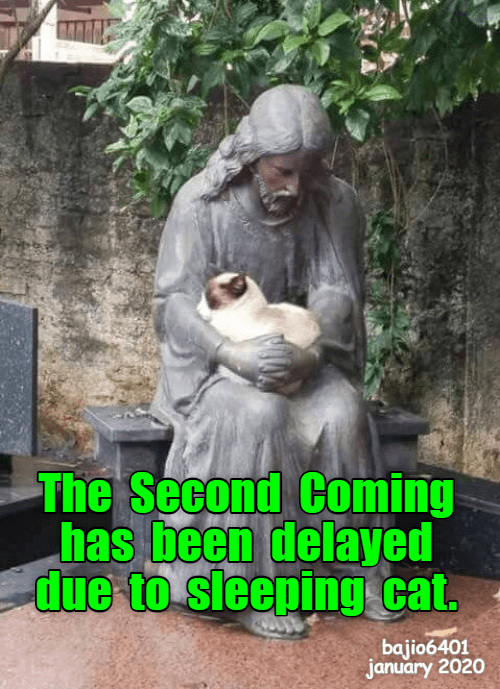 Adaptation - The Second Coming has been delayed due to sleeping cat. bajio6401 january 2020