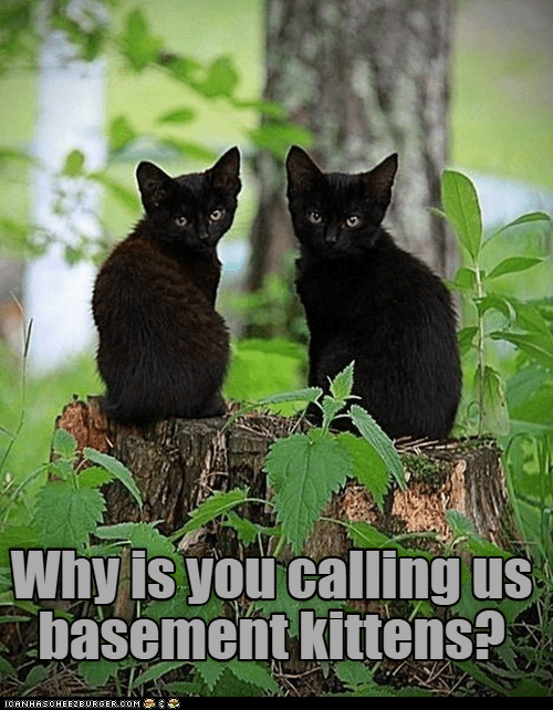 Cat - Why is you calling us basement kittens? ICANHASCHEEZEURGER.COM