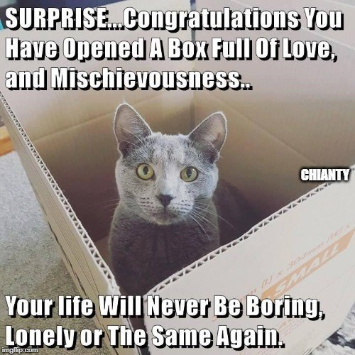 Cat - SURPRISE.Congratulations You Have Opened A BoX Full Of Love, and Mischievousness. CHIANTY MALL Your life Will Never Be Boring, Lonely or The Same Again. imgfilip.com