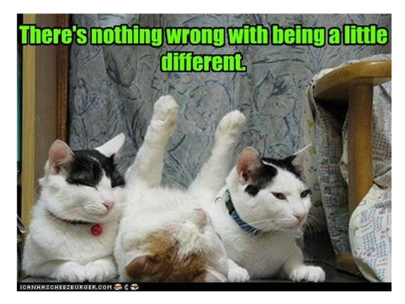 Cat - There's nothing wrong with beingalittle different. ICANHASCHEEZEURGER.COM