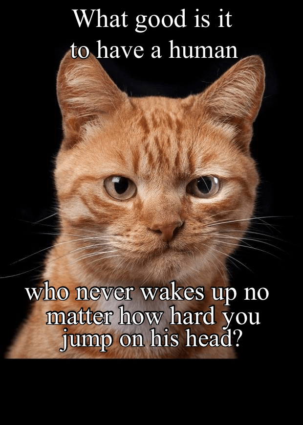 Cat - What good is it to have a human who never wakes up no matter how hard you no. jump on his head?